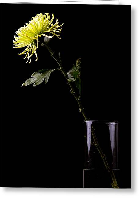 Greeting Card featuring the photograph Thirsty by Sennie Pierson
