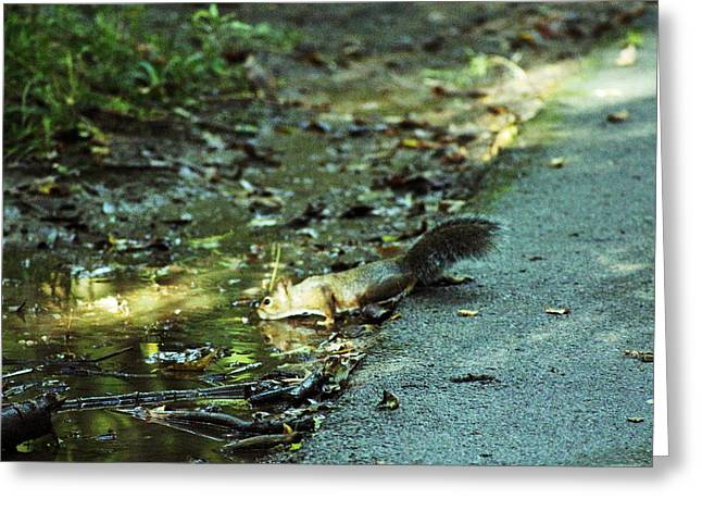 Greeting Card featuring the photograph Thirsty Squirrel by Lorna Rogers Photography