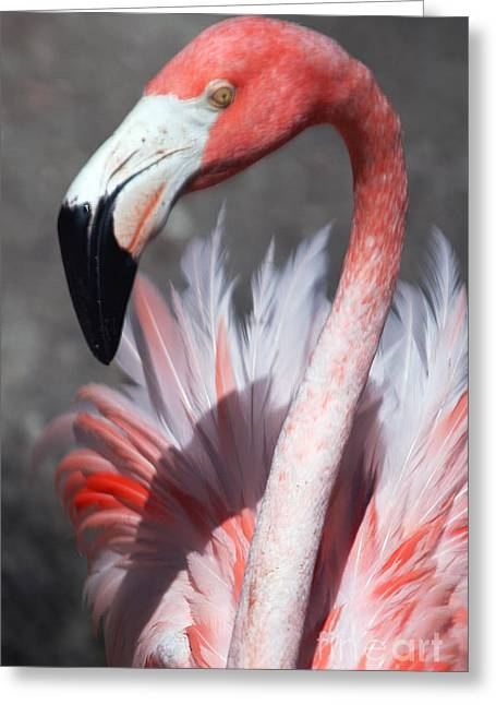 This Is My Good Side Greeting Card by Sheryl Unwin