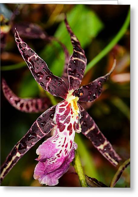 This Orchid Is A Star Greeting Card by Beth Akerman