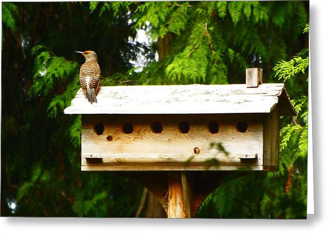 This Place Is Too Crowded Greeting Card by Kym Backland
