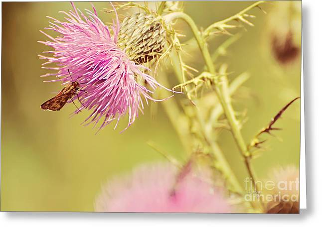 Thistle And Friend Greeting Card by Lois Bryan