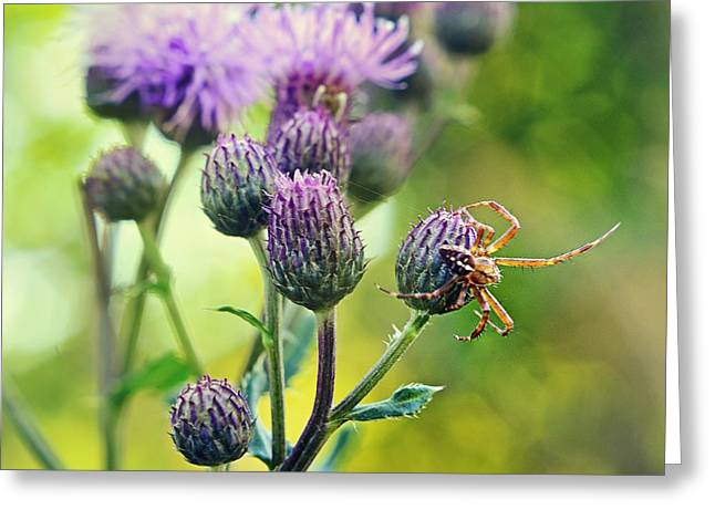 Thistle And Spinner Greeting Card by Gynt