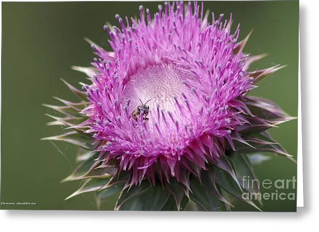 Thistle And The Bee Greeting Card by Tannis  Baldwin
