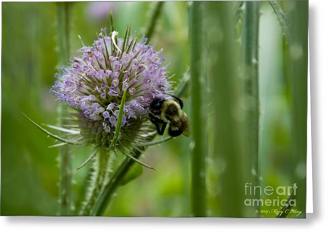 Thistle Forest Greeting Card
