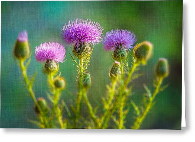 Thistle In The Sun Greeting Card