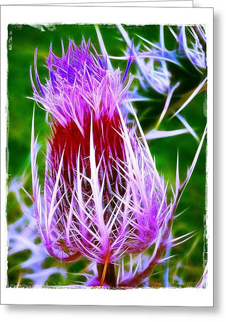 Thistle Greeting Card by Judi Bagwell