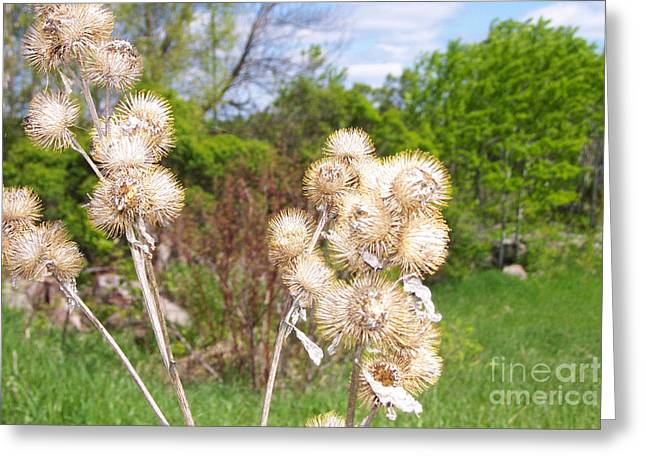 Thistle Me This Greeting Card by Mary Mikawoz