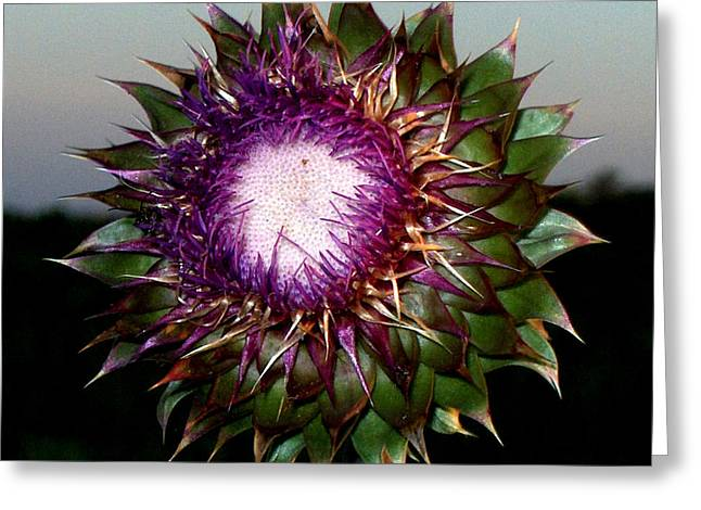 Thistle Night Greeting Card
