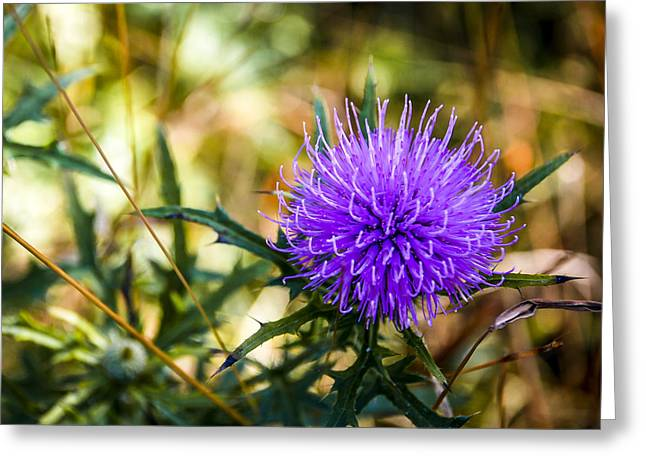 Greeting Card featuring the photograph Thistle by Phil Abrams