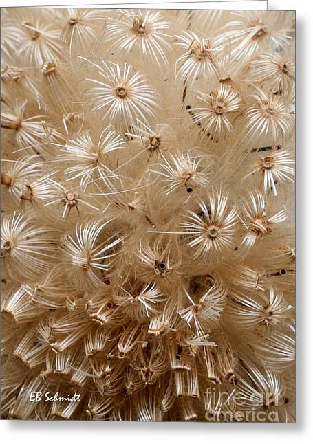 Thistle Seed Head Greeting Card