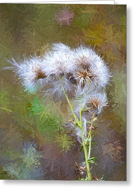 Thistle Seeds Digital Artwork Greeting Card by Sharon Talson