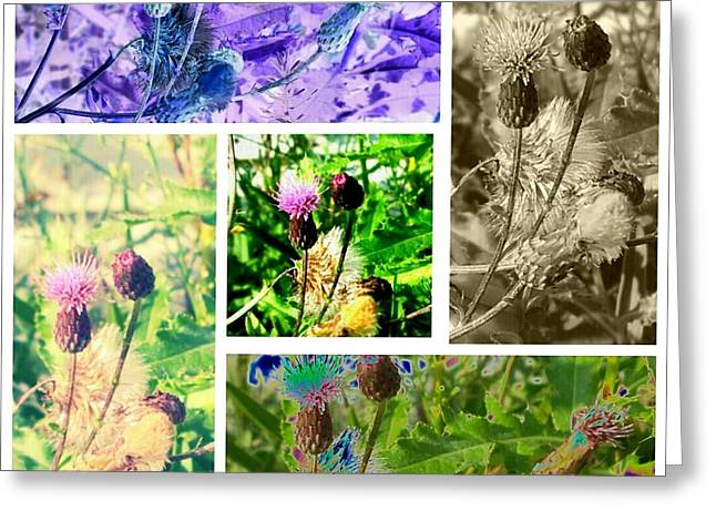 Thistle Study Greeting Card