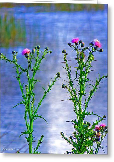 Thistle Greeting Card by T Guy Spencer