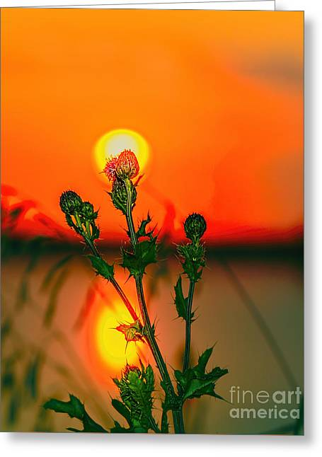 Thistle At Sunset Greeting Card