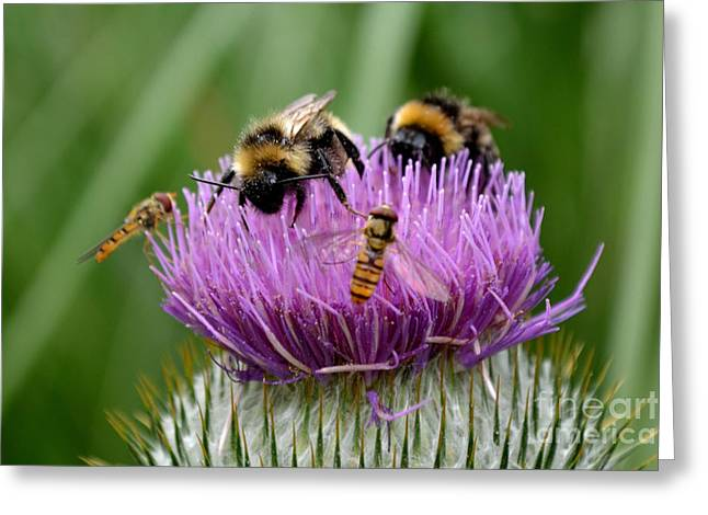 Thistle Wars Greeting Card by Scott Lyons