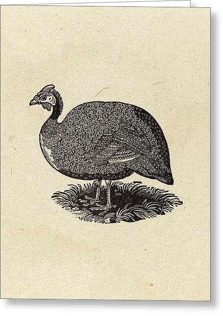 Thomas Bewick British, 1753 - 1828, Guinea Hen Greeting Card by Quint Lox