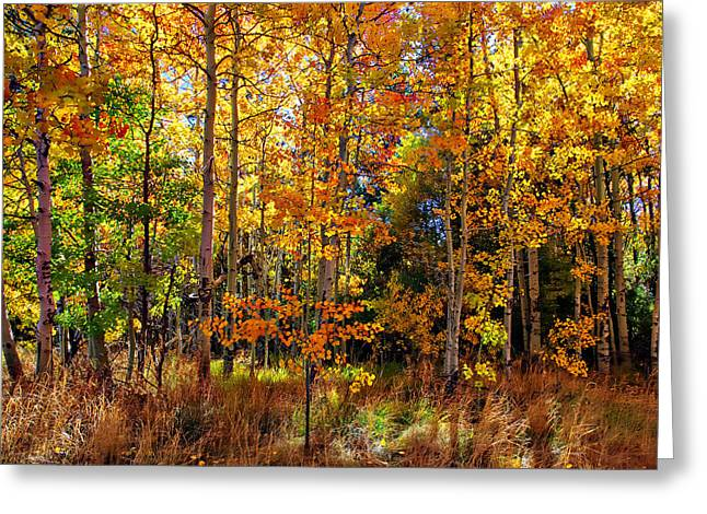 Thomas Creek Fall Color Greeting Card