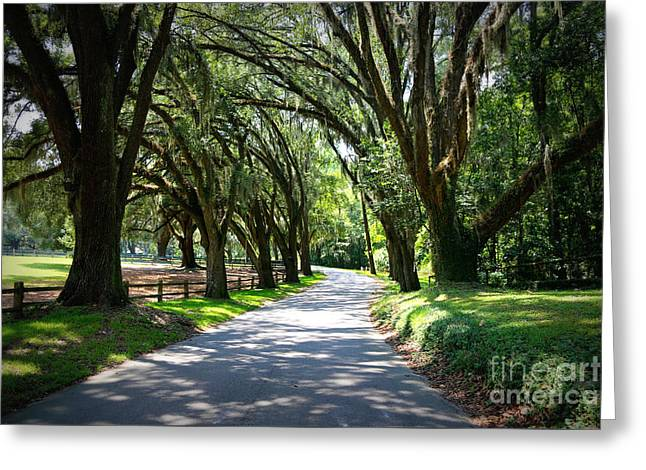 Thomasville Road Greeting Card by Carol Groenen