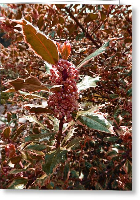 Greeting Card featuring the photograph Thorn Berry by Laurie Tsemak