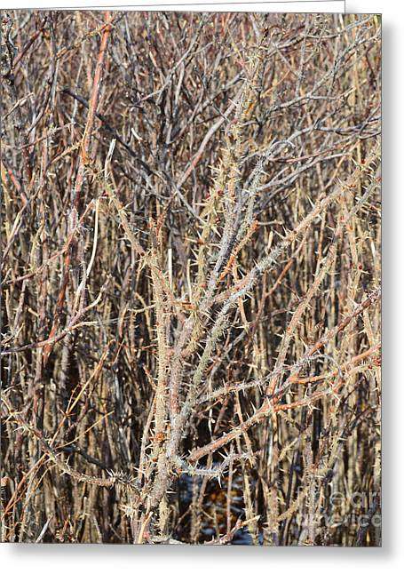 Thorny Wall Greeting Card by Meandering Photography