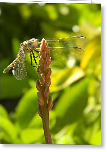 Those Wings Greeting Card by Adel Nemeth