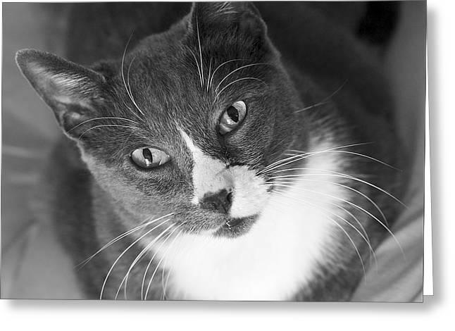 Devotion - Cat Eyes Greeting Card