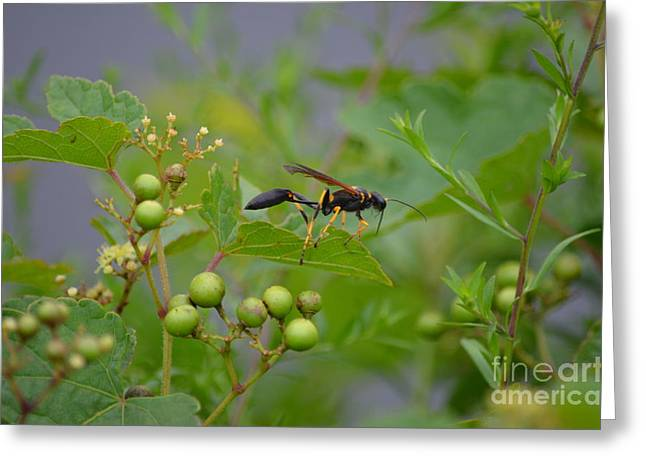 Greeting Card featuring the photograph Thread-waist Wasp by James Petersen