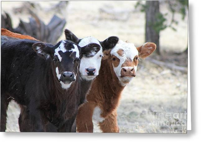Three Amigos 1 Greeting Card