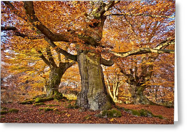 Three Ancient Beech Trees - Germany Greeting Card by Martin Liebermann