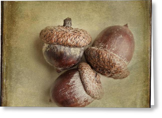 Three Autumn Acorns Greeting Card by Lisa Russo