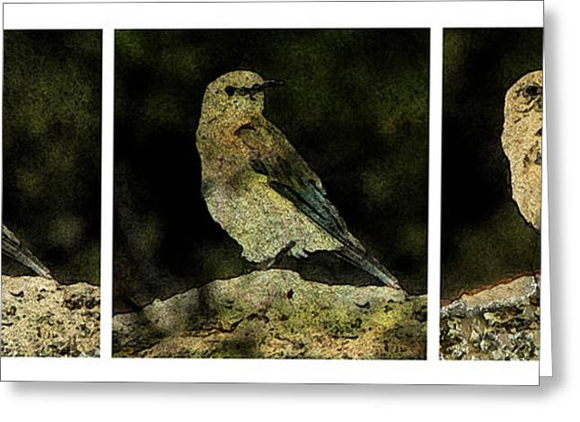 Three Birds Greeting Card by John Goyer