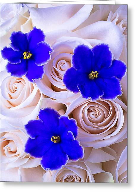 Three Blue Violets Greeting Card by Garry Gay