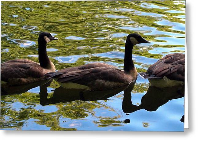 Three Canadian Geese Greeting Card by Deborah Fay