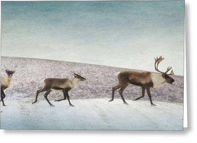 Three Caribous Greeting Card
