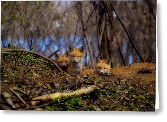 Three Cute Kit Foxes At Attention Greeting Card