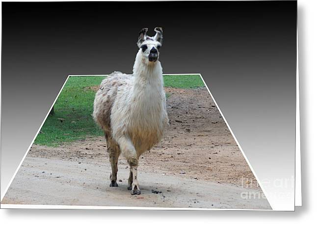 Three D Lama Greeting Card