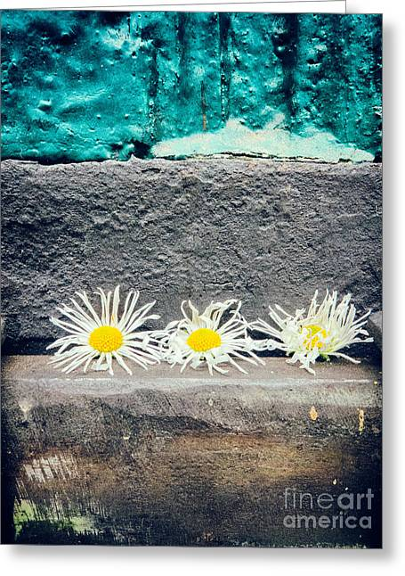Greeting Card featuring the photograph Three Daisies Stuck In A Door by Silvia Ganora