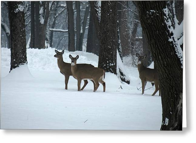 Three Deer In Park Greeting Card by Eric Switzer