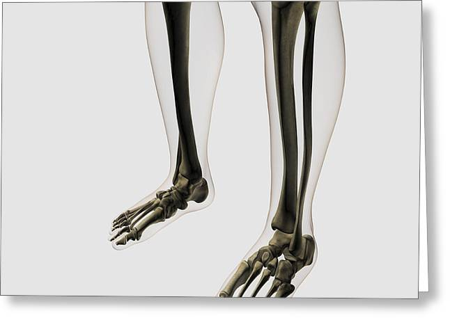 Three Dimensional View Of Human Leg Greeting Card by Stocktrek Images