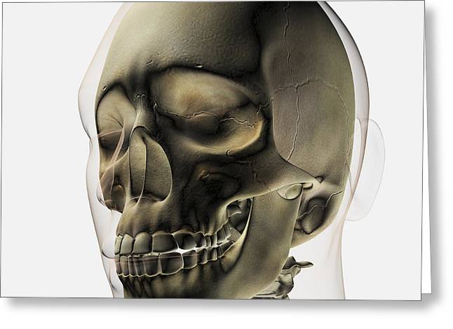 Three Dimensional View Of Human Skull Greeting Card by Stocktrek Images