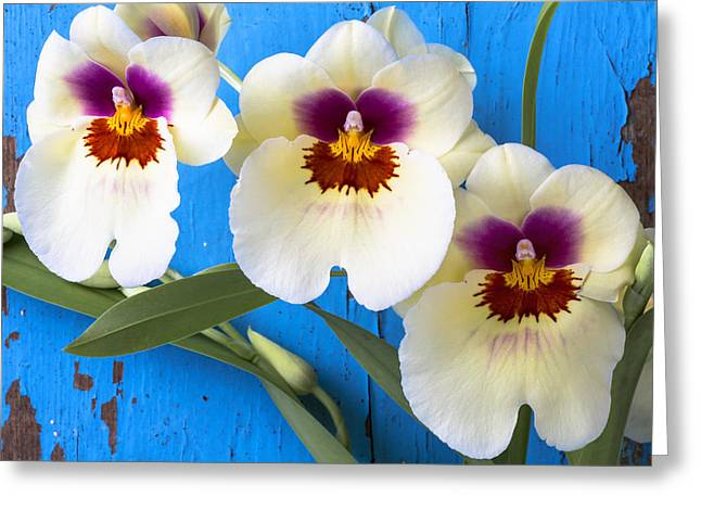 Three Exotic Orchids Greeting Card by Garry Gay