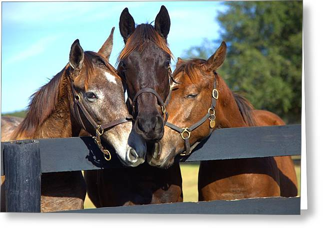 Three Friends Greeting Card by Gordon Elwell