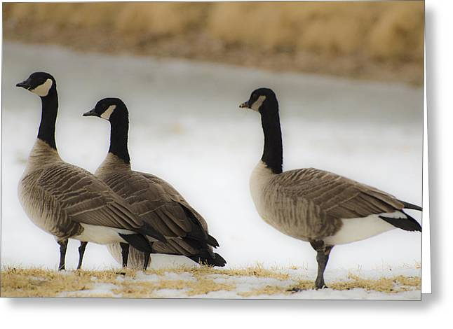 Three Geese Abstract Greeting Card by Dave Dilli