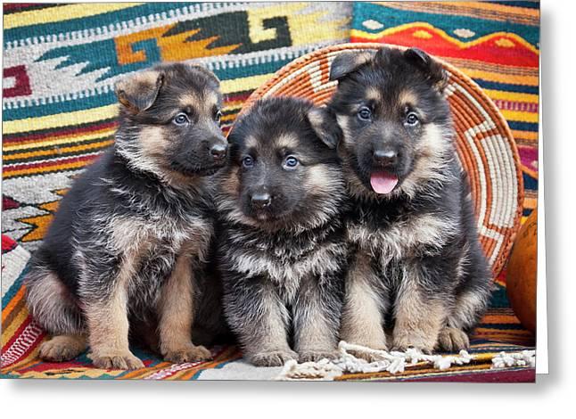 Three German Shepherd Puppies Sitting Greeting Card by Zandria Muench Beraldo
