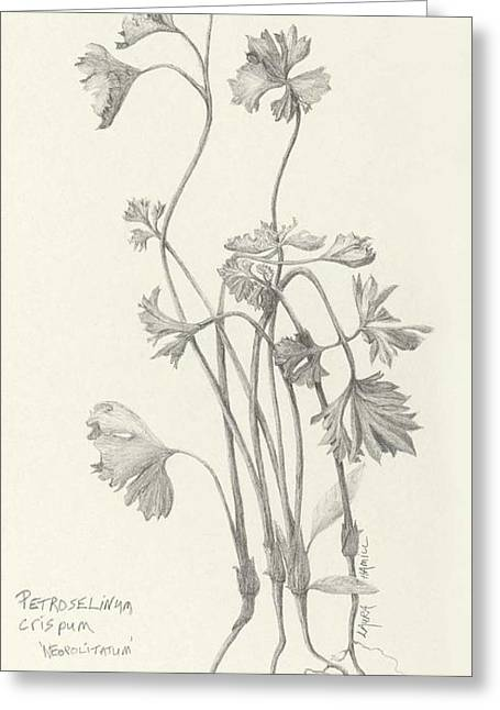 Three Herbs - Parsley Greeting Card