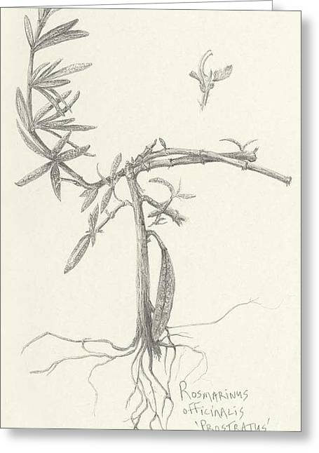 Three Herbs - Rosemary Greeting Card