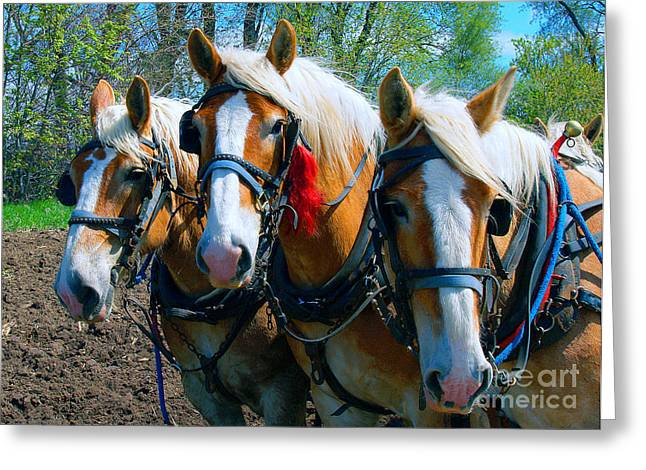 Greeting Card featuring the photograph Three Horses Break Time  by Tom Jelen