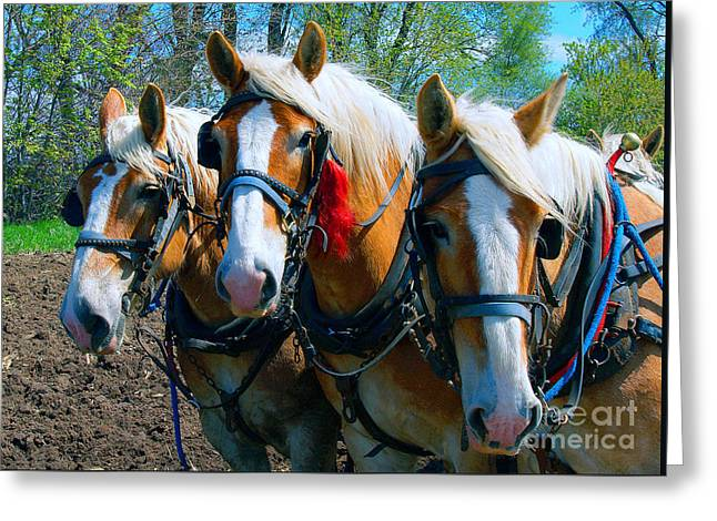 Three Horses Break Time  Greeting Card