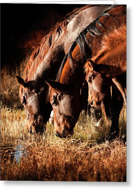 Three Horses Drinking In Dusky Light Greeting Card by Sheila Haddad